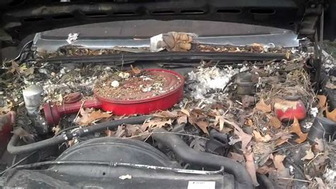 how to your not to cars how not to store your car rodent damage