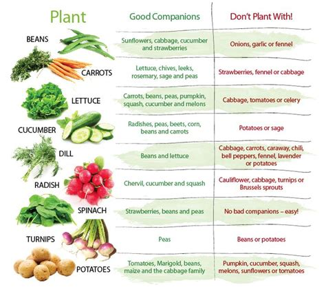 16 Best Images About Gardening Companion Planting On Companion Vegetable Gardening