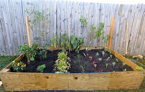 backyard vegetables initial planting of our raised backyard vegetable garden