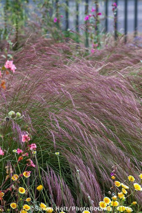 plant awns best 25 california native garden ideas on pinterest