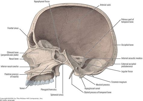 skull sections 77 best images about brain zoom out on pinterest pineal