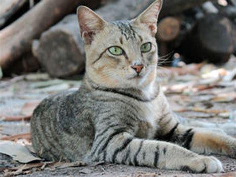 Sho Kucing Yang Bagus cat ur day