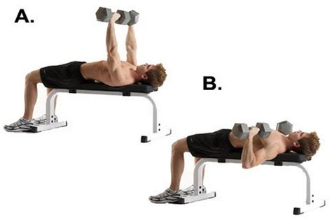 db flat bench press top 10 chest exercises to get ripped for next summer