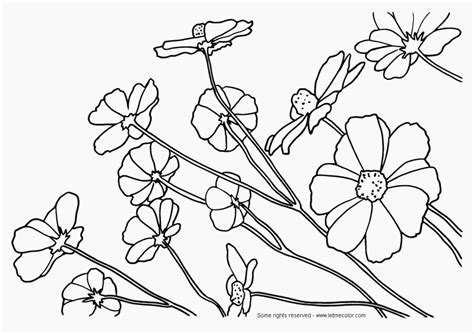 grassland coloring pages az coloring pages