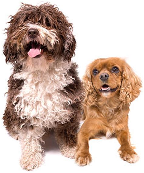 puppy wormer walmart worming your dogs information