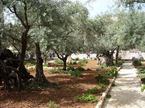 Garden Of Gethsemane Images by Escaping Godhood If Jesus Did Bleed In Gethsemane
