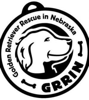 golden retriever omaha ne meet golden retriever rescue in nebraska pets in omaha
