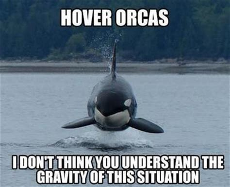 Whaling Meme - i m in the water orca clone whaling on y all hazmat rap