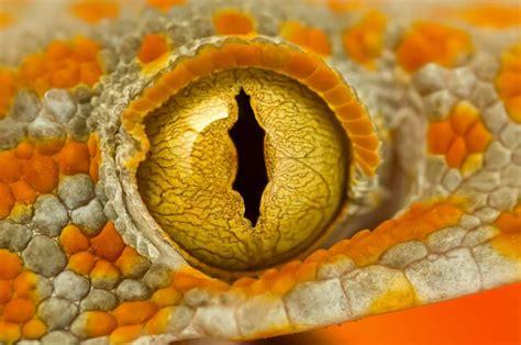 imagenes ojos de reptiles 12 most unusual animal eye