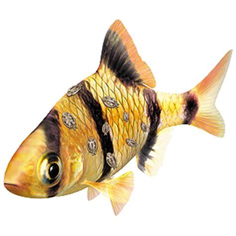 aquarium fish diseases and how to spot them | tetra aquarium