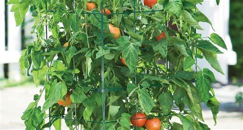 orto in terrazzo orto nel terrazzo orto in terrazzo coltivare l orto in