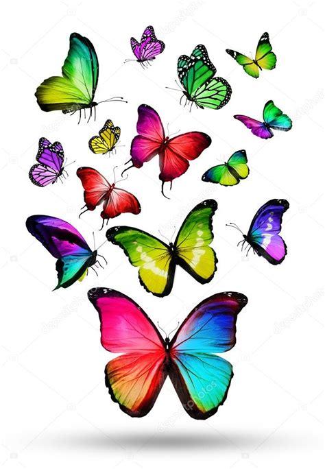 imagenes de varias mariposas muchos colores diferentes mariposas volando foto de