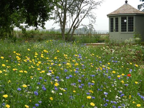 wild flowers for bees and butterflies wild flower lawns meadows buy wildflower seeds