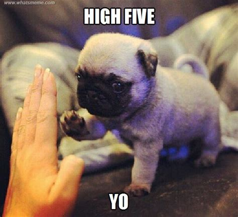High Five Meme - best 25 high five meme ideas on pinterest funny quotes