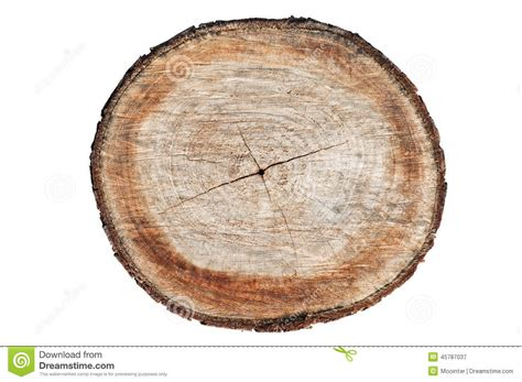 cross section of a tree trunk cross section of tree trunk stock photo image 45787037
