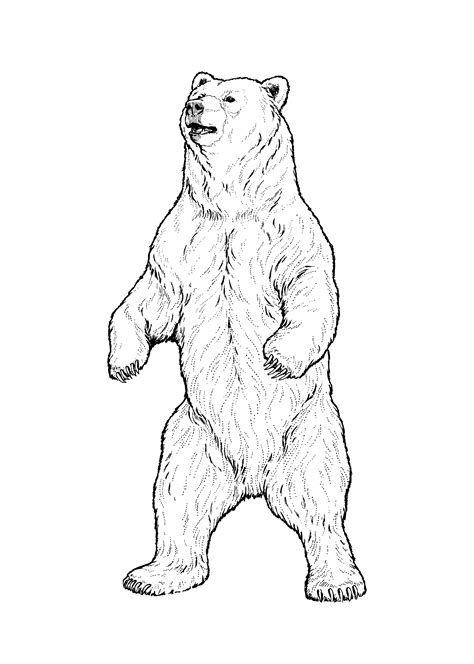 mean bear coloring page famous mean grizzly bear coloring pages illustration