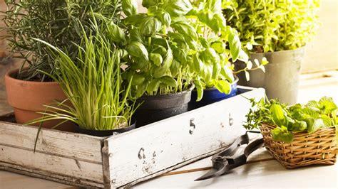 piante aromatiche in vaso piante aromatiche in vaso come si coltivano