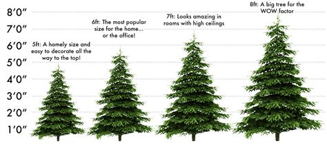 real christmas tree size guide crimbotrees