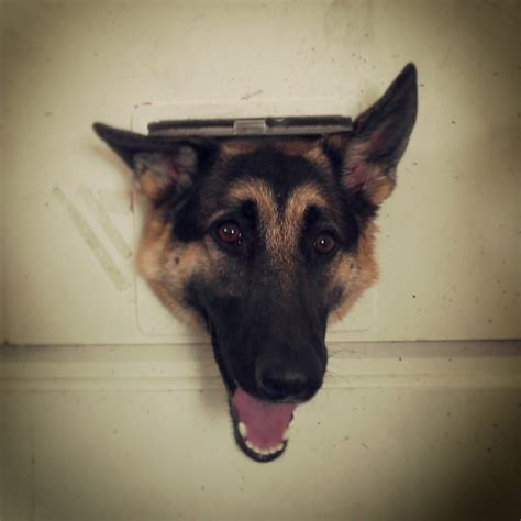 15 things not to do with a puppy books 15 things you should never say to a german shepherd owner