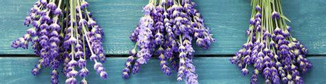 fiori artificiali torino ingrosso piante artificiali torino erbamatta
