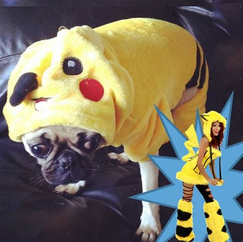 pug in taco costume 15 pugs that are redefining the costume this