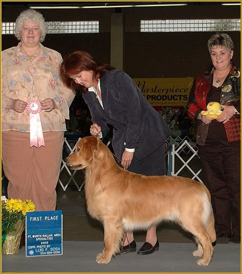 Dog Sweepstakes - dallas ft worth metro golden retriever club