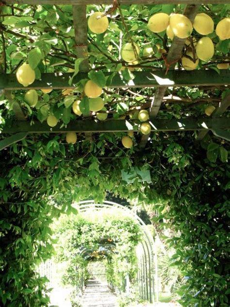 mediterranean climbing plants mediterranean garden this is an achievable goal in