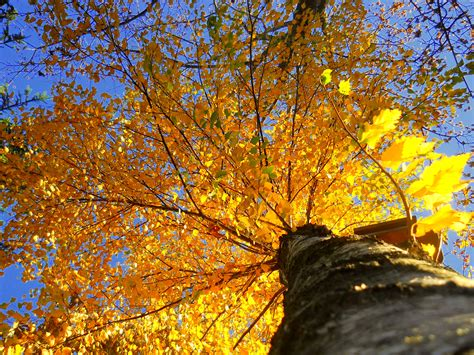google images autumn leaves sun shining through the leaves autumn autumn leaves