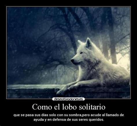 lobo solitario y su 841669317x como el lobo solitario que se pasa sus d 237 as solo con su sombra pero acude al llamado de ayuda y
