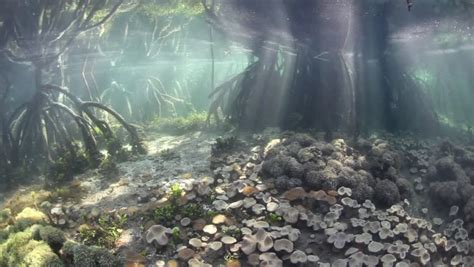 aquascape wallpapers weneedfun