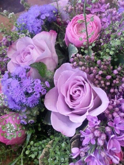 ageratum lilacs ranuncula  purple pictures   images  facebook tumblr