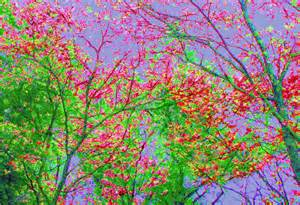 colorful trees january 2013 colorful background wallpapers