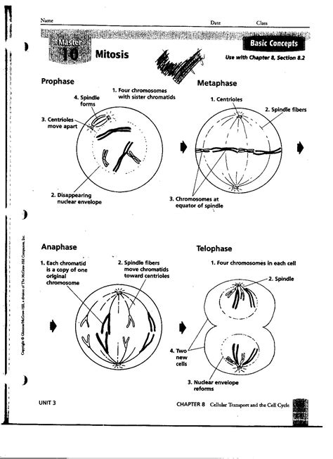 Stages Of Mitosis Worksheet Answers by 18 Best Images Of Mitosis Notes Worksheet Answers