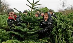 How to buy the right christmas tree money the guardian