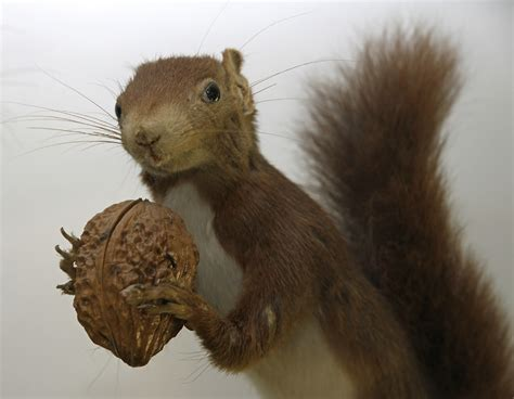 15 nicely nutty facts about squirrels