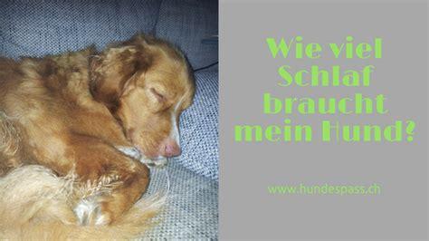 wie viel schlaf brauch ich wie viel schlaf braucht der sporthund