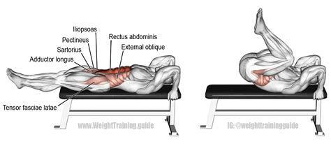 lying bench leg raise lying leg and hip raise exercise guide and videos weight