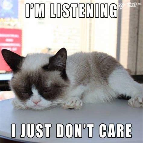 Best Of Grumpy Cat Meme - 2327 best images about grumpy cat on pinterest memes