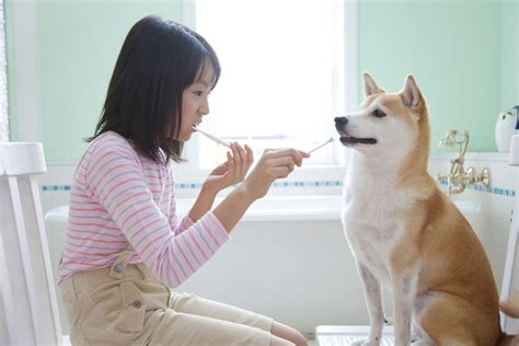 can you use human toothpaste on dogs important things to look for in a toothpaste oxyfresh