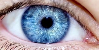 the human eye: 51 facts about your eyes | lenstore.co.uk