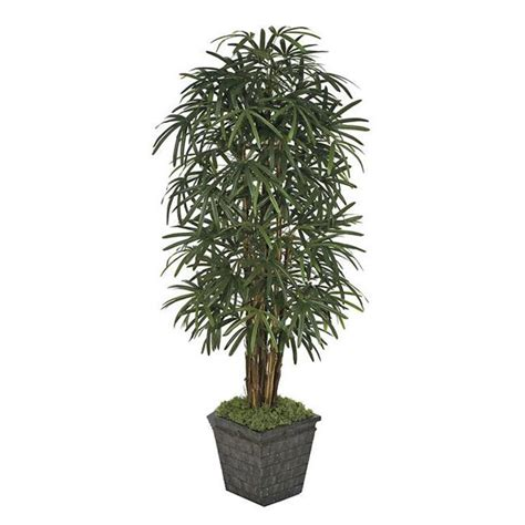 Olive Tree In Planter by Olive Tree In Planter Walmart
