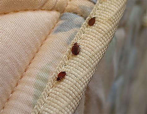 bed buggs phoenix bed bug expert 14 photos 40 reviews pest