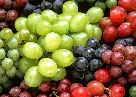 are grapes toxic to dogs vet how many grapes would be poisonous to a what to do