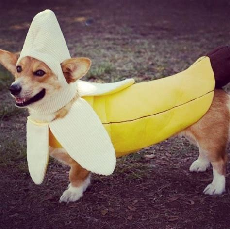 bananas for dogs banana costume and