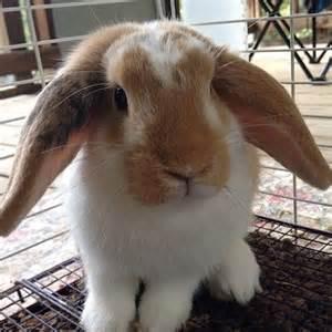 floppy ear bunny spring pinterest