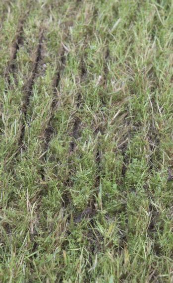 Schöner Rasen Ohne Unkraut 2066 by Sch 246 Ner Rasen Ohne Unkraut 100 Rasen Ohne Unkraut Wie