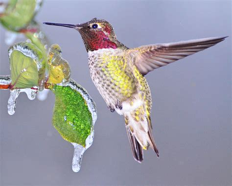 top 28 what do hummingbirds eat in the winter 43 best
