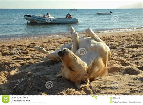 relaxers for dogs relaxed royalty free stock photography image 22119247