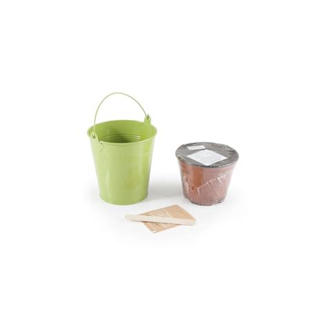 vaso basilico basilico biologico in vaso di zinco