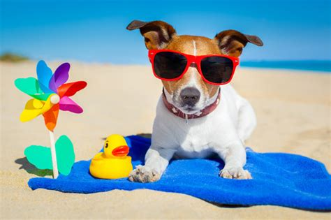 Pool Care Tips 7 summer cool down tips for your dog nuzzle your gps